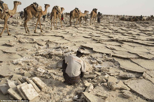 Muối đóng thành từng tảng lớn trên mặt đất