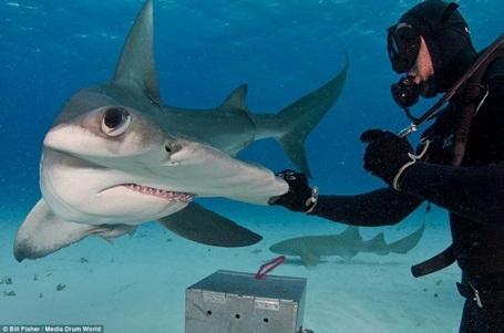 Con cá mập dài tới 6m. (Nguồn: Daily Mail)