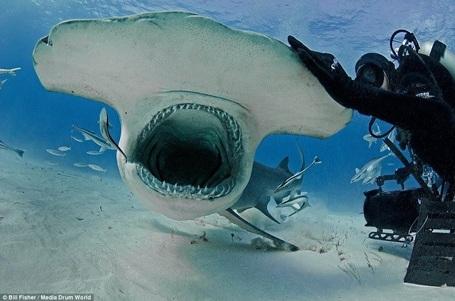 Con cá mập tỏ ra khá hung dữ với hàm răng sắc nhọn. (Nguồn: Daily Mail)