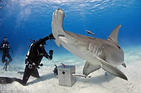 Joe đã sử dụng cá mồi để thuần hóa chú cá mập. (Nguồn: Daily Mail)