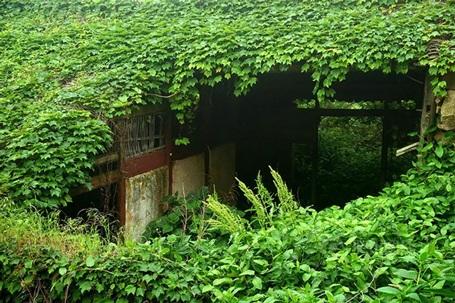 Những ngôi nhà hoang đang đàn bị dây leo nuốt chửng.