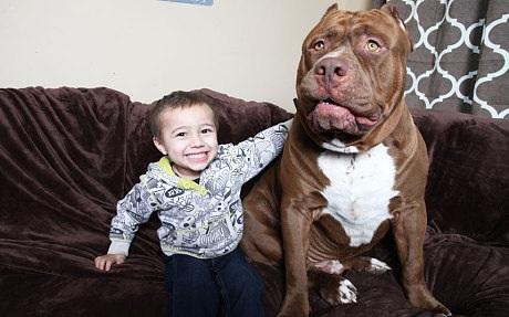 Cậu bé Jordan trông quá nhỏ bé khi ngồi bên cạnh Hulk