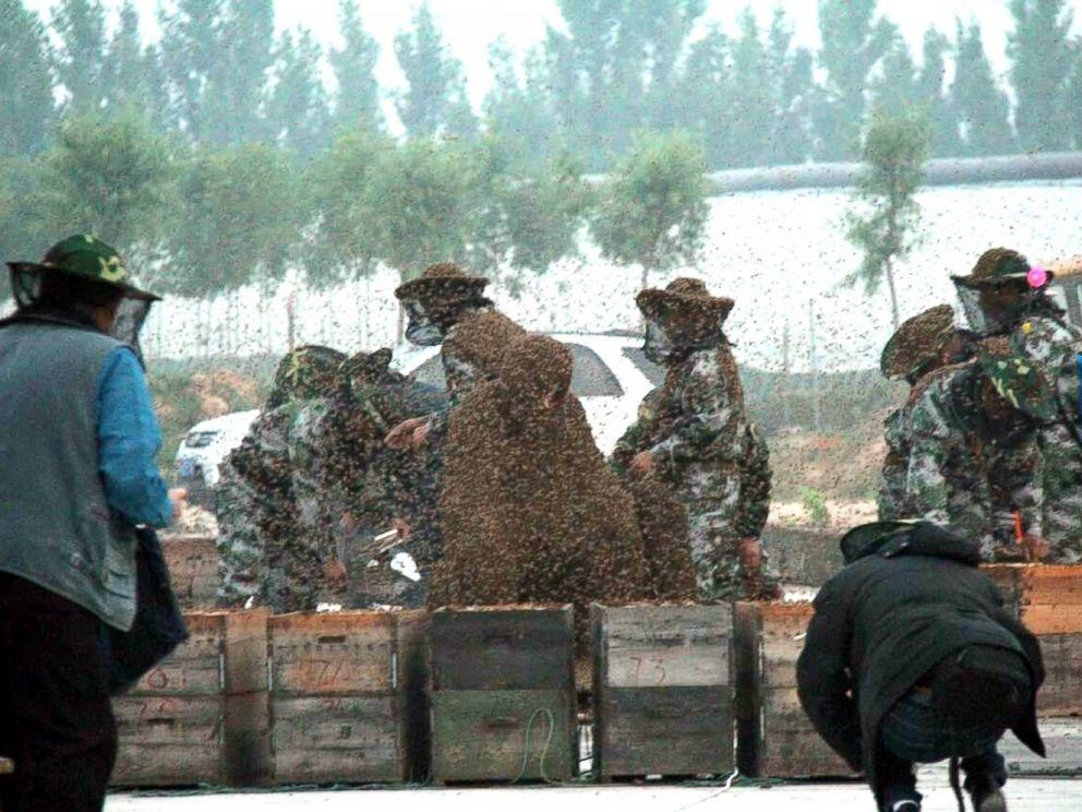 Đồng nghiệp mở cả tá thùng đựng ong để đổ lên người Gao Bingguo