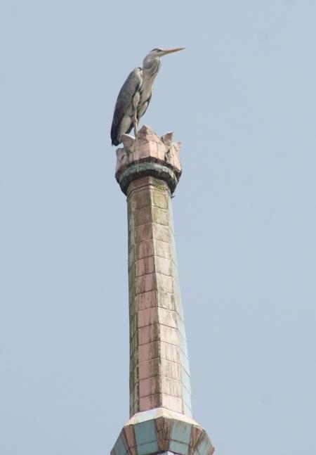 Một con vạc nghỉ chân trên đỉnh tháp cao nhất của chùa.
