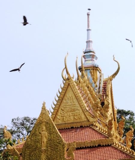 Ngày càng nhiều vạc về ngôi chùa này trú ngụ.
