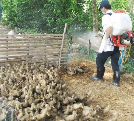 Nhiều tỉnh, thành ĐBSCL đang tích cực phòng, chống dịch cúm A/H5N1.