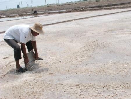 Việc làm muối của diêm dân ngày càng khó khăn vì thời tiết và giá cả. (Ảnh: Huỳnh Hải)