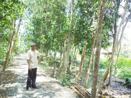Ông Cam bên vườn tràm hàng trăm cây nhưng tòa chỉ đến được...35 cây.
