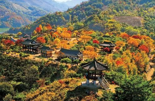 Khung cảnh mùa Thu Hàn Quốc đầy lãng mạn với kiến trúc truyền thống thấp thoáng