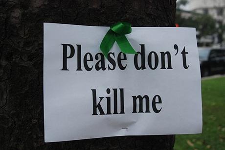 Đừng chặt cây