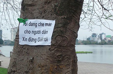 Dòng thông điệp trên cây xanh bên Hồ Tây