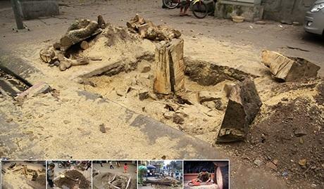 Những hình ảnh các gốc cây đã bị chặt được đăng trên fan page