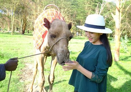 Vân Shi được thăm những chú lạc đà châu Phi