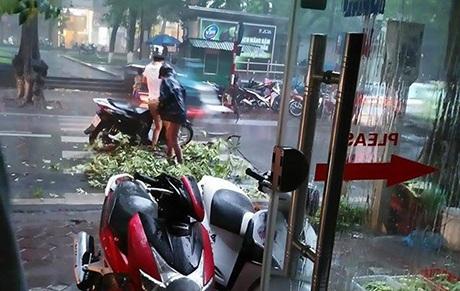 Hai người bị đổ xe do cành cây gãy trên phố Quán Thánh