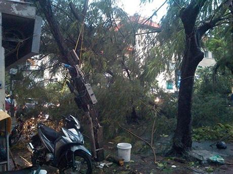 Cây và cột điện sắp đổ trên phố Tạ Quang Bửu. Ảnh: Dũng Nguyễn