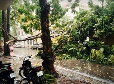 Cành cây gãy trên phố Trần Quốc Toản. Ảnh: Tít