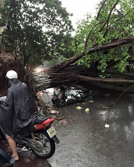 Hai người bị thương do cây đổ đè lên trên đường Võ Thị Sáu