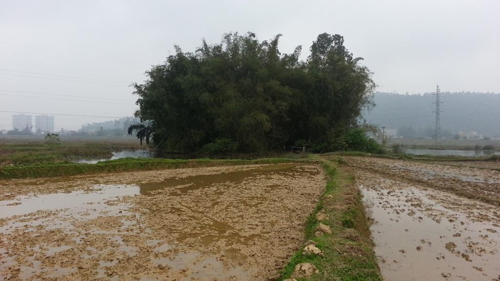 Nhìn từ xa, ít ai biết trong khóm tre um tùm giữa cánh đồng kia có người sinh sống.