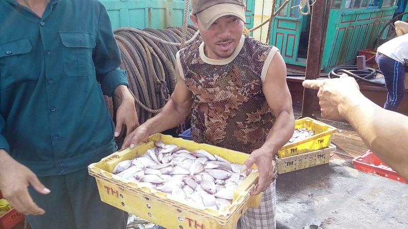 Ngư dân được mùa lộc biển đầu năm mới
