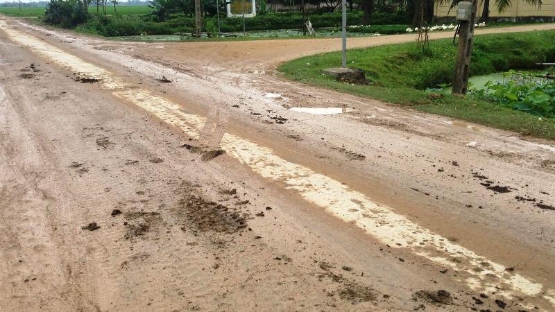 Phân rơi vãi dọc đường, gây ô nhiễm môi trường.