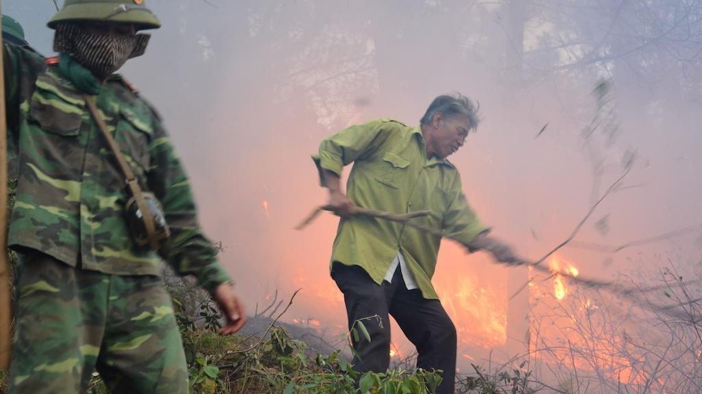 Đám cháy lan nhanh, ngọn lửa lớn thiêu đốt rừng thông.
