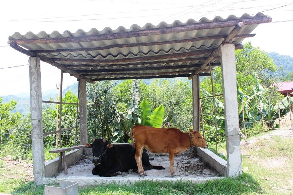 """Người nông dân cùng đàn gia súc cũng """"trốn"""" nắng khi đã bị vắt kiệt sức."""