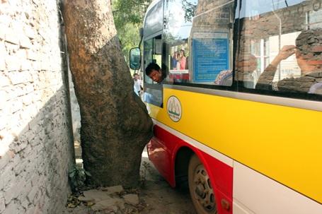 Lái xe buýt cố lách qua hiện trường vụ tai nạn nhưng bị gốc xà cừ bên đường cản lại