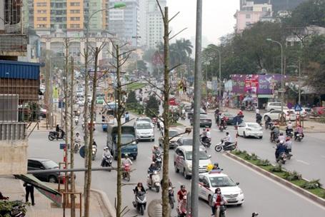 Chủ tịch Hà Nội chỉ đạo xử lý sau thanh tra vụ cây xanh