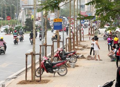 Cây xanh trên địa bàn Hà Nội sẽ được quản lý bằng phần mềm