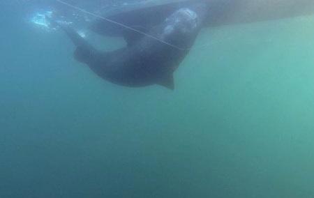 Con cá mập ước tính khoảng 200 tuổi, và phải mất 90 phút mới câu nổi nó lên.