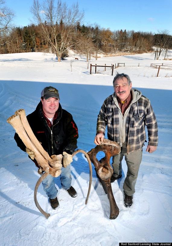 Phát hiện xương động vật kỷ băng hà trong vườn nhà