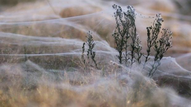 Mạng nhện che phủ cả thị trấn.