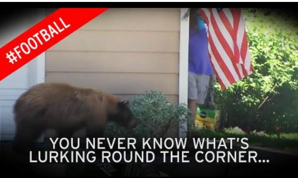 Gấu cũng sợ người
