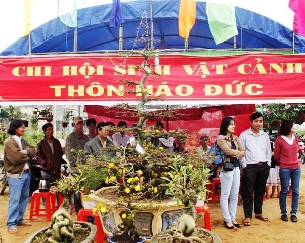 Làng mai Háo Đức là thôn đầu tiên phát triển nghề trồng mai ở Nhơn An