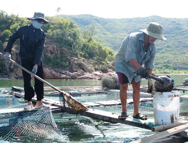 Người dân nỗ lực vớt dầu cứu cá