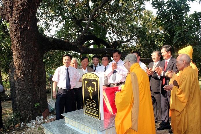 Hàng ngàn người đến chùa Từ Quang xem xoài Đá Trắng được công nhận là Cây Di sản Việt Nam