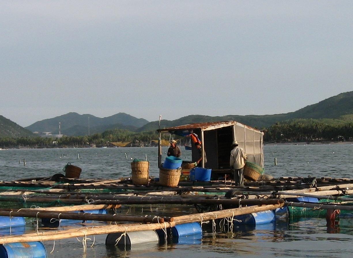 Phú Yên được mệnh danh là Vương quốc tôm hùm của khu vực miền Trung