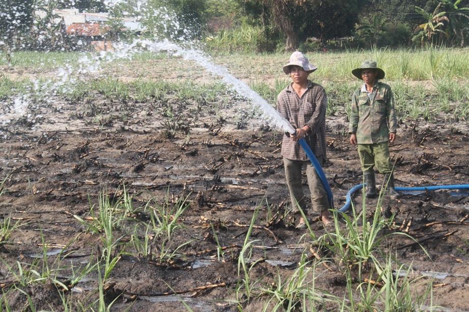 Đầu mùa hè, người dân tăng cường máy bơm nhiều mã lực để bơm nước cứu mía