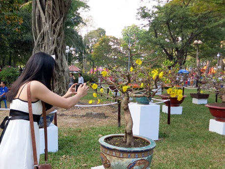 Cành đào Nhật Tân được hét giá 1 triệu đồng tại công viên Hoàng Văn Thụ
