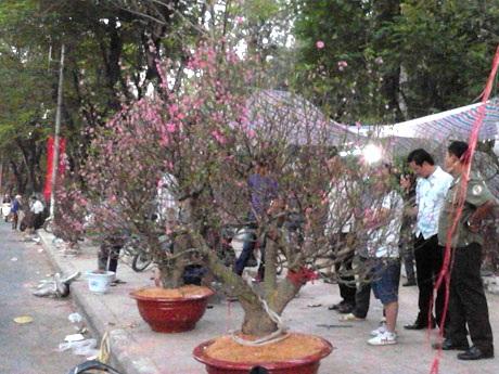 Khách đổ dồn sang các khu vực bán hoa đào