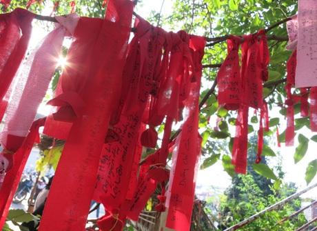 Hàng nghìn mảnh vải cầu nguyện nhuộm đỏ cả cành cây