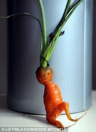 Củ cà rốt có hình thù người ngoài hành tinh - 3