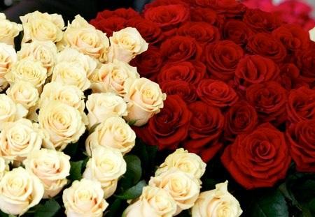 Trang hoàng Windows đón 8/3 với bộ sưu tập hình nền hoa đầy màu sắc