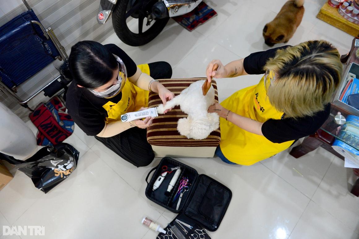 Đắt khách dịch vụ làm đẹp cho thú cưng tại nhà ở TPHCM mùa Covid-19 - 13