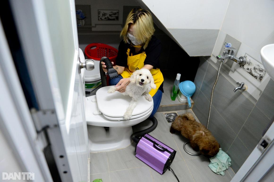 Đắt khách dịch vụ làm đẹp cho thú cưng tại nhà ở TPHCM mùa Covid-19 - 15