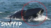 Sống sót dù bị cá voi khổng lồ ngoạm ngang thân