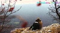Ngày Hạnh Phúc - Hồ Ngọc Hà & V.Music