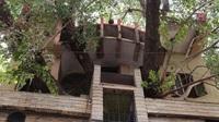 Ngôi nhà 4 tầng bao quanh cây khổng lồ 150 năm tuổi
