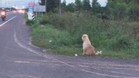 Chú chó trung thành ngồi đợi chủ suốt 4 năm ở cùng một chỗ