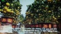 """Làm cây Tết 2019 trong vườn """"cổ mộ"""", lão nông bất ngờ kiếm tiền tỷ"""